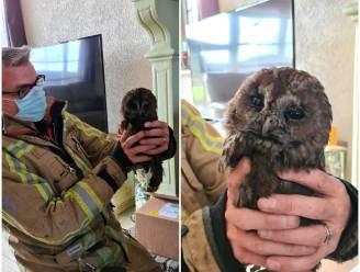 Brandweer redt bosuil uit kachel van woning