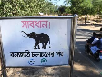Wilde olifanten trappen vier Rohingya-vluchtelingen dood