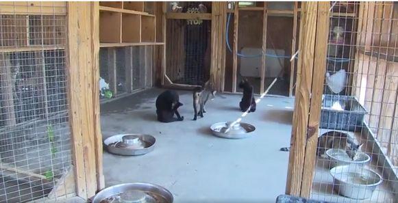 Enkele ongedeerde katten van het asiel.