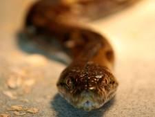 Un serpent découvert sous le capot d'une voiture à Anderlecht