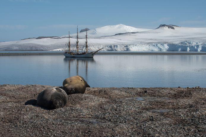 De historische driemaster waarmee Adwin de Kluyver naar Antarctica voer, een bark uit 1911, genaamd Europa.
