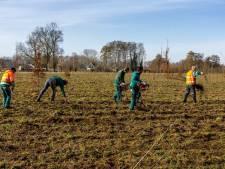 Provincie Gelderland plant de komende tien jaar 1700 hectare nieuw bos bij, de eerste boompjes zijn aangeplant bij Epe