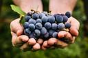 Het stofje  flavanoïde zit ook in fruit en groenten, zoals druiven, citrusvruchten en paprika.