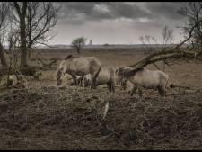 'Schiet overschot aan dieren in natuurgebieden af'