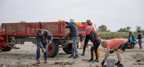 De Ouwerkerkse costa is klaar voor de zomer; vrijwilligers hebben de oesters weggeharkt