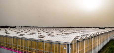 Inspectie SZW neemt tuinders onder de loep: 'Glastuinbouw ligt weer onder vergrootglas'