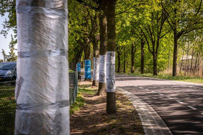 Plastic folie om de stammen bij bomen aan de Sonseweg in Lieshout