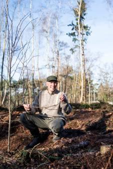 In bossen in Twente en de Achterhoek wordt volop gekapt én geplant voor insecten en schimmels