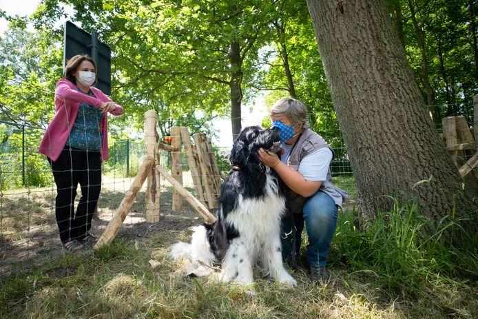 In omliggende gemeenten zijn hondenweides heel populair, nu krijgt ook Bonheiden zo'n zone aan de Krankhoeve.