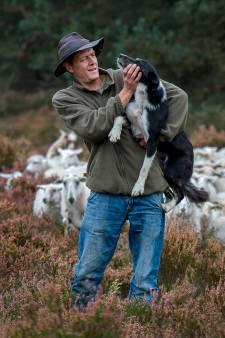 Stijn Hilgers ruilt Brabantse schapen voor Franse koeien in: 'Herderscultuur ga ik missen als kiespijn'