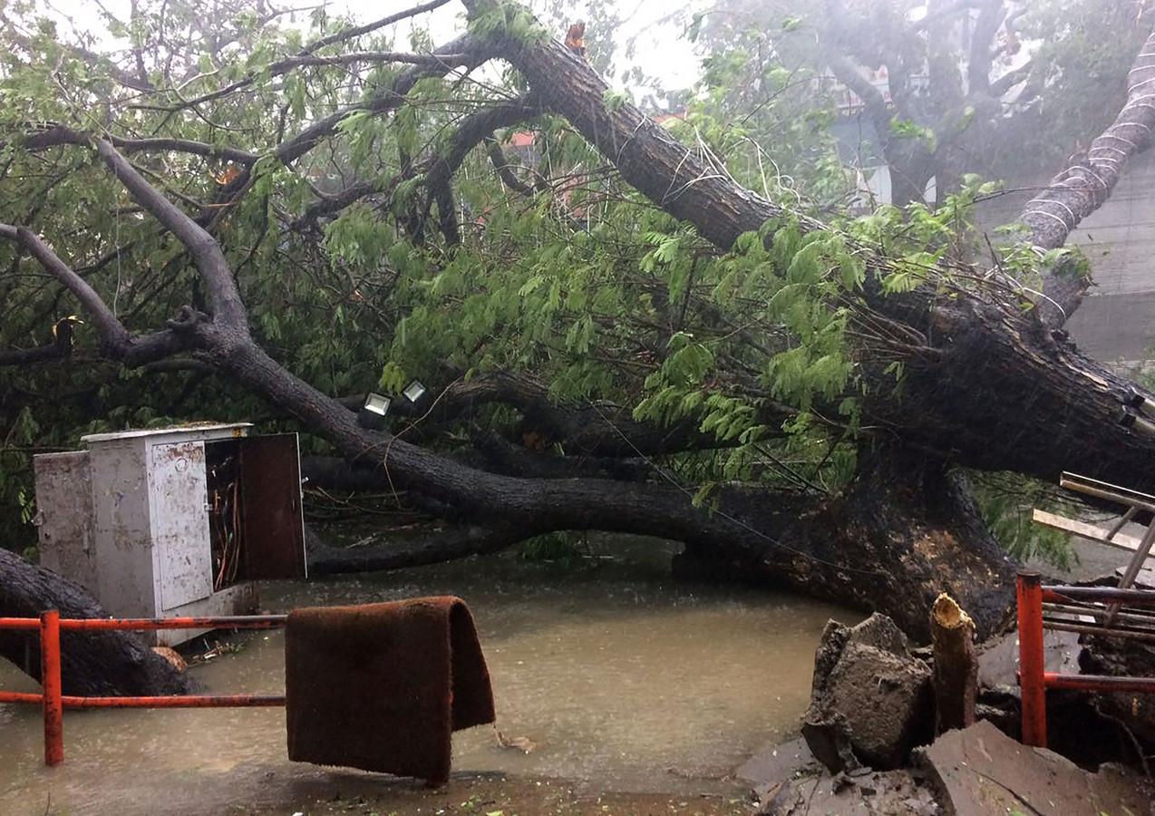 Een omgevallen boom in Chennai.