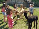 Kinderen spelen met de alpaca's.