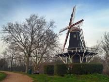 Eik bij molentje Brouwershaven wordt gekapt