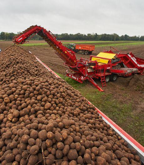 Duizenden aardappelen van het land gehaald, want de komende dagen worden nat
