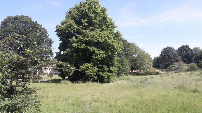 Via dit veld bij de Herthoornstraat en de Tra in Het Dorp moet het vrachtverkeer voor het ecovat van Het Dorp worden afgewikkeld, zo luidt het voorstel. Het ecovat moet achter de bomen komen.