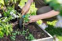 Met bloemen tussen de groenten spaar je bestrijdingsmiddelen uit