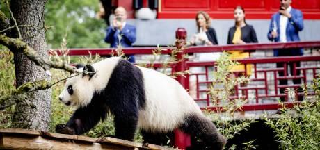 Pandaverblijf Ouwehands uitgeroepen tot 'mooiste ter wereld'