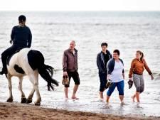 Honden en paarden mogen in zomer Zuiderstrand op