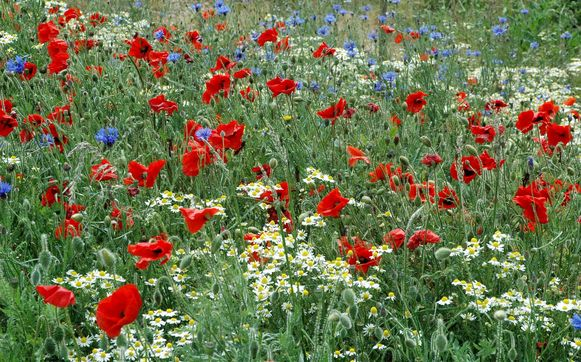 Een mooie bloemenweide (themabeeld).