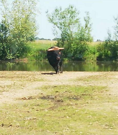 'Beheer grote grazers in natuurgebieden moet beter, voorkom lijden bij het afschieten'