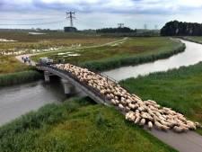 Bak met water uit Limburg stroomt zo de Biesbosch in komende dagen: 'Dit is waar het gebied voor bedoeld is'