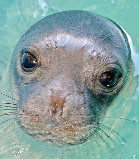 Grieks eilandje rouwt: geliefde zeehond Kostis van dichtbij gedood met harpoengeweer