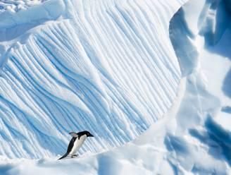 Wetenschappers bezorgd over stabiliteit zuidpoolijs