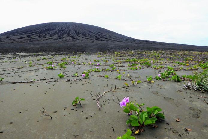 En quatre ans seulement, de la vie est apparue sur l'île.