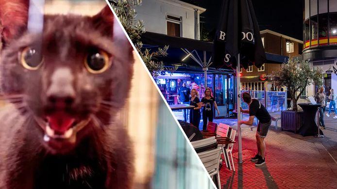 De kat die vanonder het puin vandaan kwam in Miami, en terrassen op de Korenmarkt die om 12 uur 's nachts hun terras weer opruimen vanwege de maatregelen