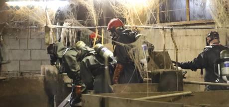 Brandweer redt ruim honderd varkens uit de gierkelder in Nunspeet, slechts enkelen overleven het niet