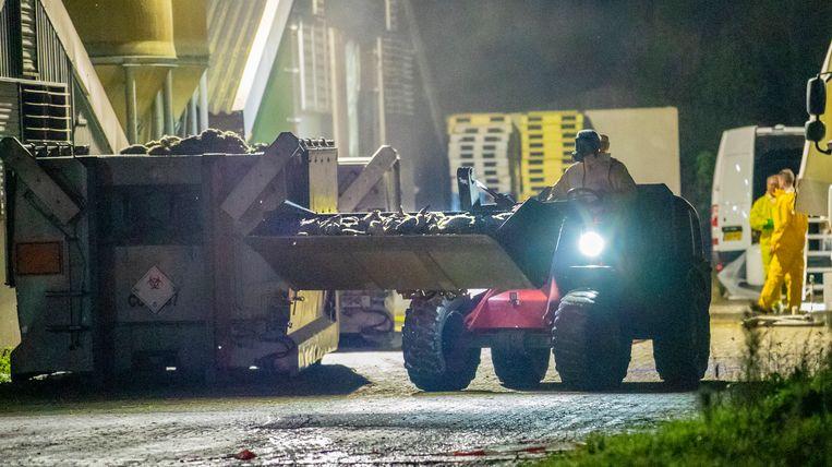 Een eendenfokkerij in het Nederlandse Terwolde wordt geruimd. Beeld Foto: Rob Voss