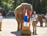 Na octopus Paul heeft Duitsland weer een EK-orakel: een olifant!