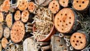 Vijf tips voor dit weekend: Bijenfeest, Brouwers in het Bos en Gent Smaakt