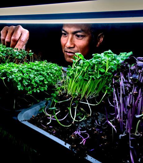 Patrick verbouwt piepkleine groenten voor de horeca en particulieren: 'Een sixpackje microgroenten'