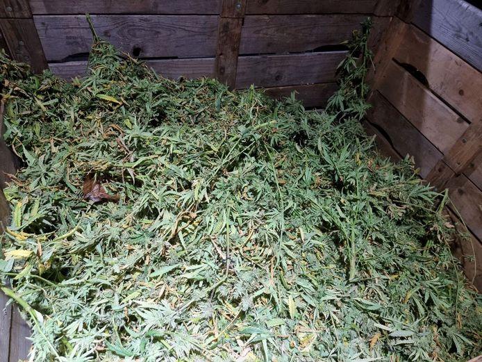 Wietplantage ontmanteld in Hengelo.