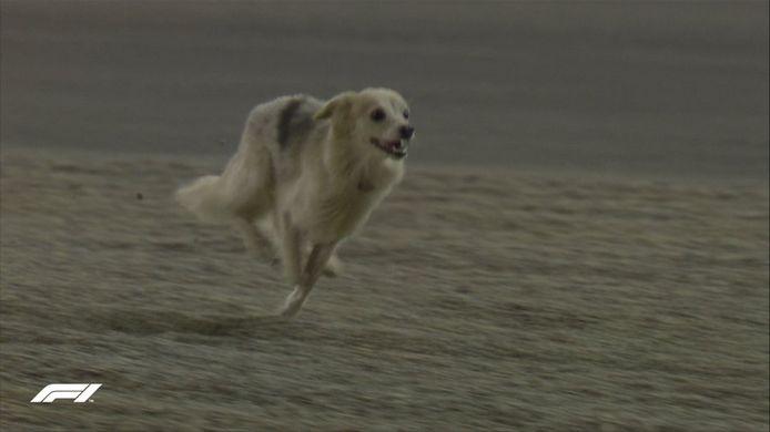 Een hond kwam het circuit op tijdens de tweede vrije training op vrijdag.