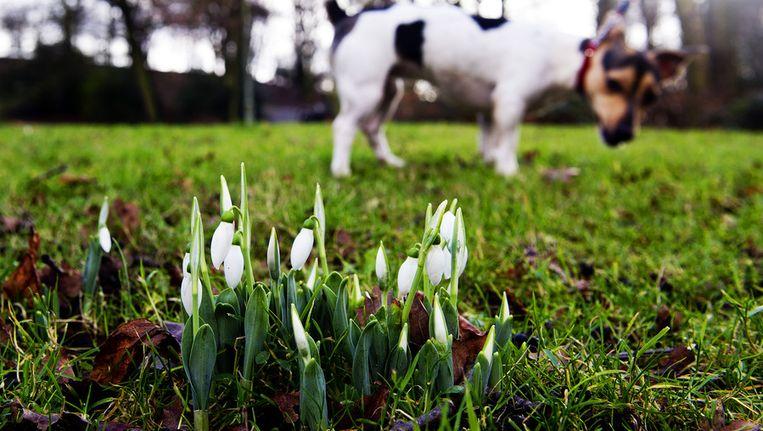 De lente is allang begonnen in de natuur. Beeld anp