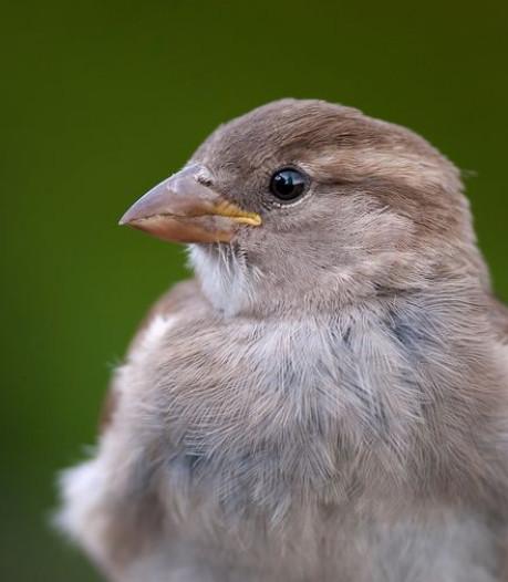 Dramatische terugloop vogelpopulatie: 'Cijfers zijn schokkend'