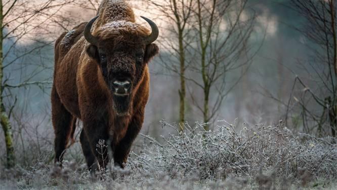 Droom van Nationaal Park Maashorst is vervlogen én de wil om er samen iets mooiers van te maken
