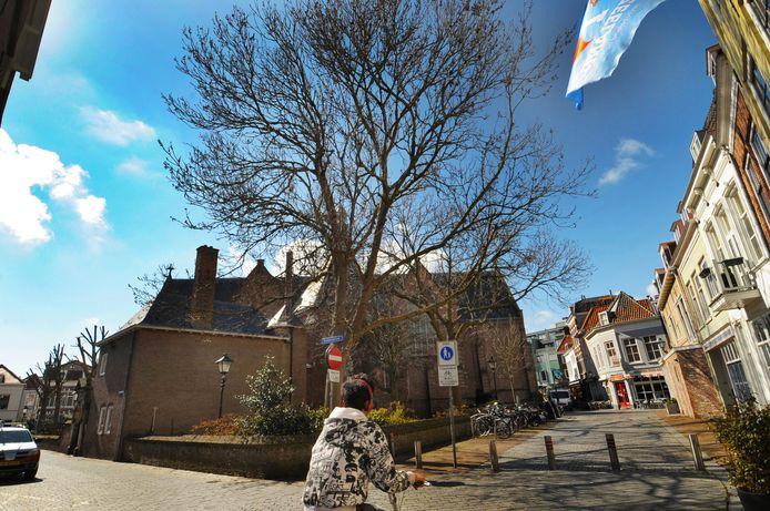 In de tuin van de Sint Jacobskerk dragen de bomen aan de kant van de Lepelstraat nog een behoorlijke takkenkroon, de bomen aan de kant van de Branderijstraat/Achter de Kerk zijn onlangs rigoureus gesnoeid.