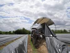 Vier het aspergeseizoen op boerderij De Stokhoven in Drempt