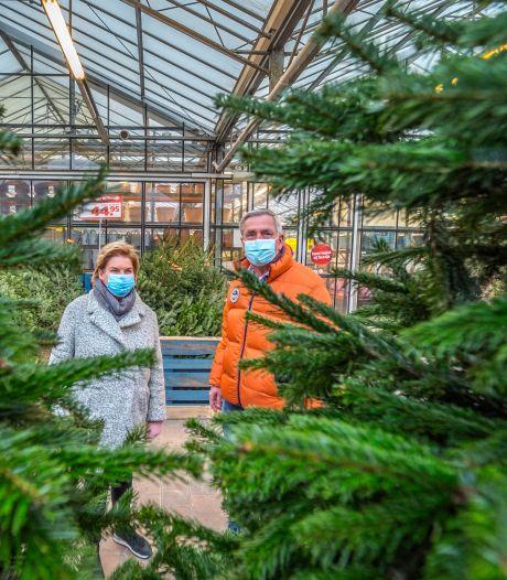 Vóór sinterklaasfeest al overuren: Kerstbomenverkoop piekt dit jaar heel vroeg