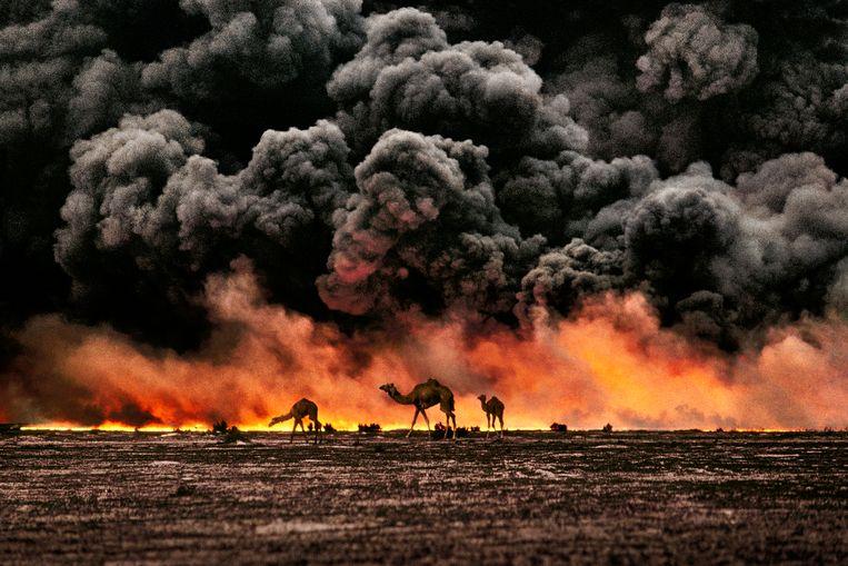 Al-Ahmadi, Koeweit, 1991, de Golfoorlog. Kamelen zoeken wanhopig naar iets eetbaars in de brandende olievelden in het zuiden van het land. Beeld Steve McCurry