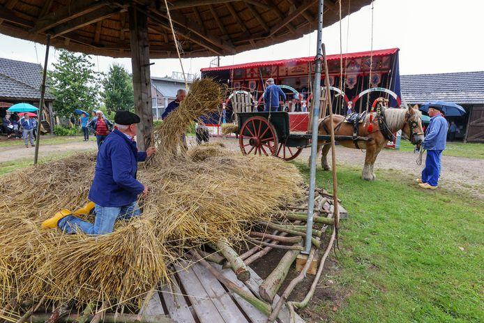 De traditionele oogstdag bij het Boerenbondsmuseum in Gemert vond dit jaar niet onder de meest ideale weersomstandigheden plaats.