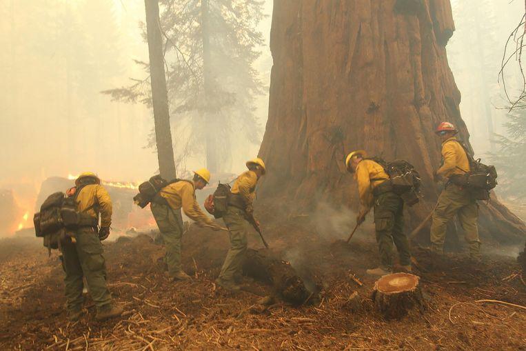 Brandweerlui bestrijden het vuur rond een sequoia in Sequoia National Forest, Californië. Beeld AFP