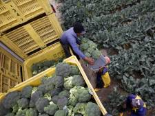 Patent op broccoli ingetrokken