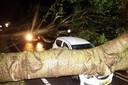 In Zwartsluis viel een boom op een rijdende auto.