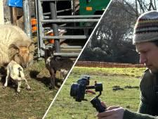 Video van de Dag | Vlogherder Daniël zag het licht en gaat nu viraal: 'Schaap bij de horens gevat'