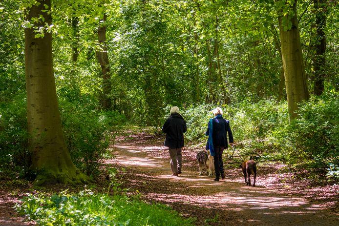 Wandelaars met honden.