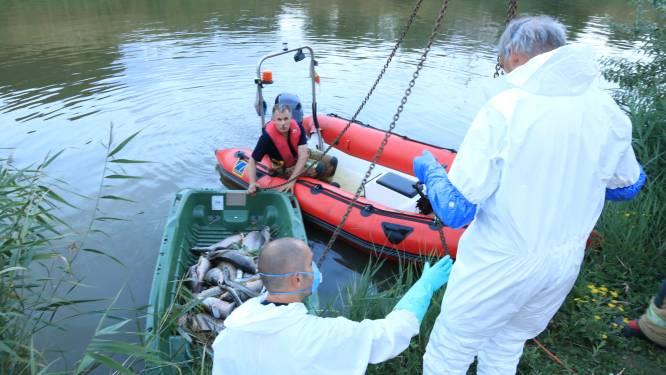 """Opnieuw vis uitgezet in Fort Liefkenshoek: """"Permanente beluchting om zuurstof in het water te brengen"""""""